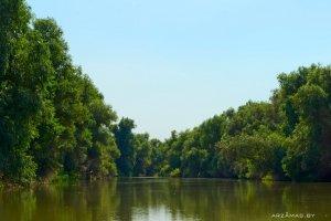 Галерейные леса дельты Волги