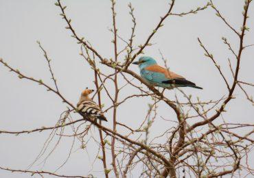 Наблюдения за птицами Западного ильменно-бугрового района