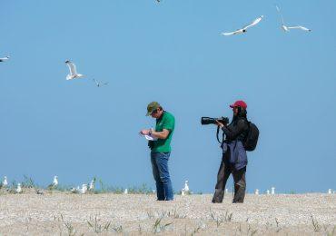Орнитологический мониторинг о. Малый Жемчужный