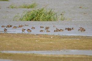 Водоплавающие птицы отдыхают в заповеднике перед дальним перелетом на зимовку