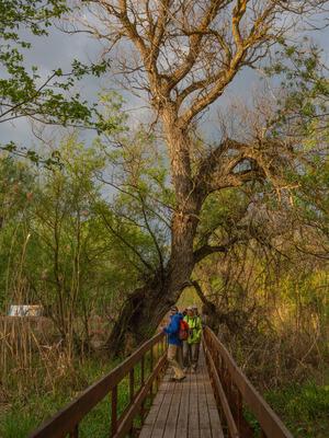 Тропа проходит и вдоль тростниковых зарослей