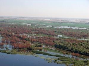 Лес, сгоревший в Иголкинском охотхозяйстве