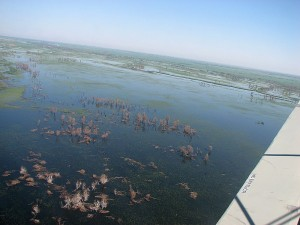 Сгоревшая колония больших бакланов в Иголкинском охотхозяйстве