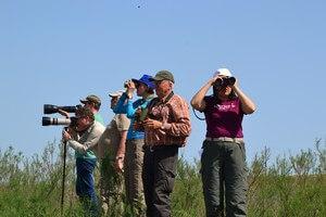 На поле тоже можно найти редких птиц