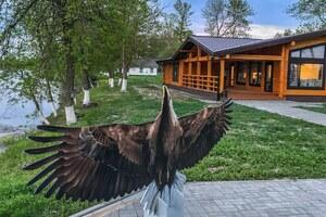 Нарисованный орлан-белохвост на фоне административно-бытового комплекса