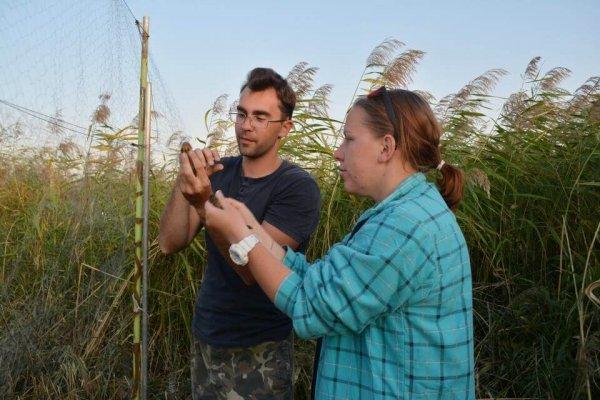 Орнитологи выпутывают птиц из паутинных сетей
